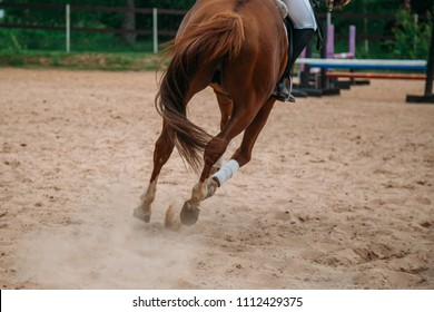 a close-up of the hooves of a running sports horse. Horse hooves in sand dust. Horse Legs