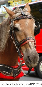 A Closeup of a horse at Central Park in New York