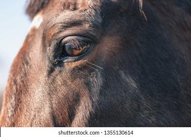Closeup of a horse eye