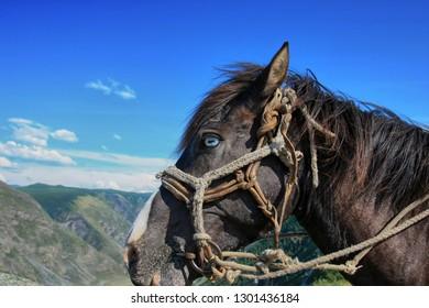Close-up horse eye in halter