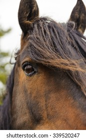 closeup horse eye with mane in Cypress Hill Provincial Park, Saskatchewan, Canada