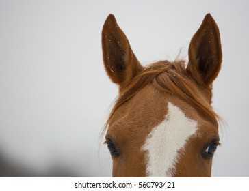 Closeup of horse head at winter day