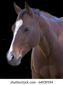 closeup of a horse isolated on a black background