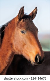 Closeup horse portrait on the sky background