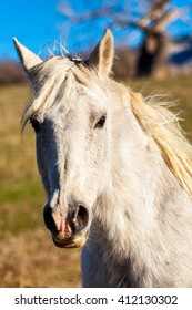 Closeup of horse showing just the head and neck