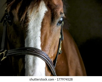 Closeup of a Horse in a Stable
