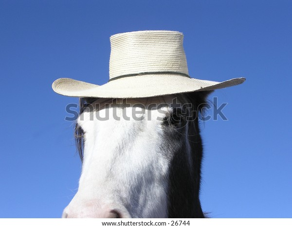 Close-up of horse in straw hat looking at camera