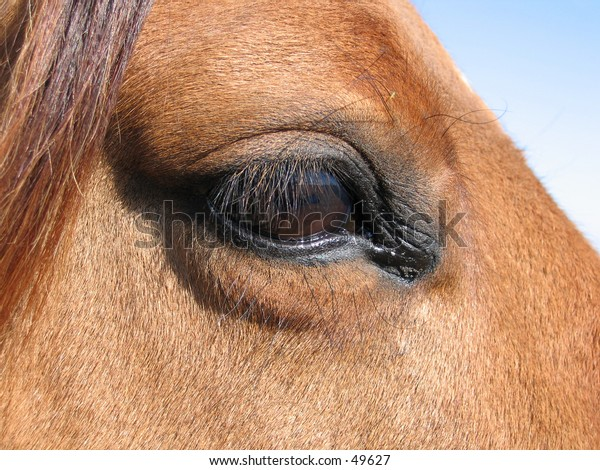 Close-up of a horse's eye