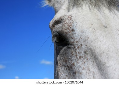Close-up of a horse's eye and blue sky