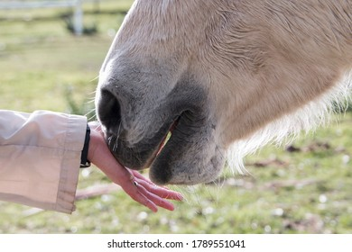 Closeup of a horse's mouth touching a person's hand