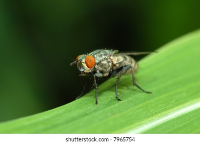 Close-up of a housefly on a blade of grass.