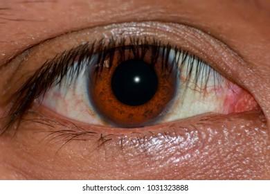 closeup human eye