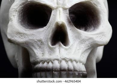 closeup of an human skull