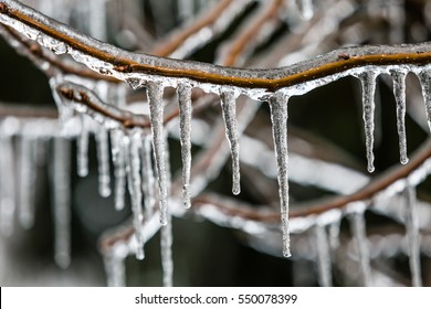Closeup of icicles hanging from branch coated in ice from a winter ice storm