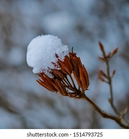 Close-up image of a branch with snow