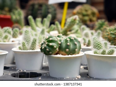 closeup image of cactus in houseolant