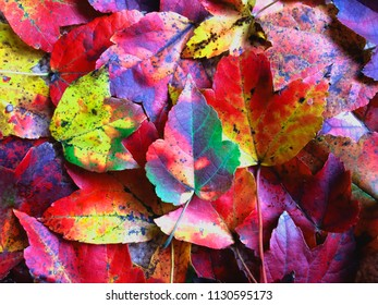 Closeup image of colorful autumn leaves taken in the East of the USA. Conceptual image for autumn.