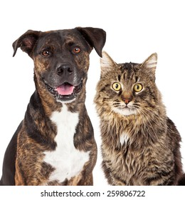 Closeup image of a cute adult mixed breed dog and cat looking forward at the camera