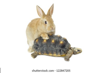 Close-up image of a cute bunny and turtle isolated in a white surface
