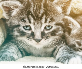 Close-up image of cute tabby little kitten