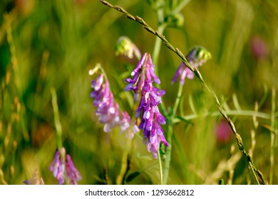 Closeup image of field flowers in a beautiful nature near Maisach, Bavaria, Germany
