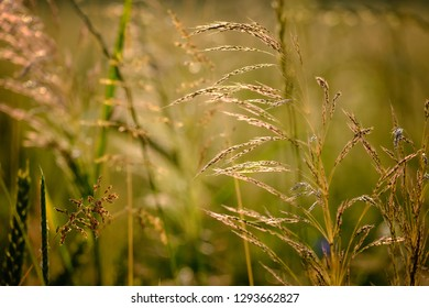 Closeup image of field plants in a beautiful nature near Maisach, Bavaria, Germany