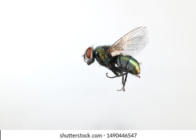 Close-up image of a fly in flight - Shutterstock ID 1490446547