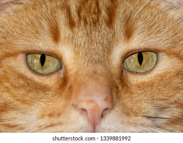Close-up image of a ginger tabby cat's eyes, with an serious stare at the viewer