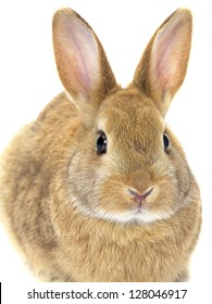 Close-up image of a golden rabbit.