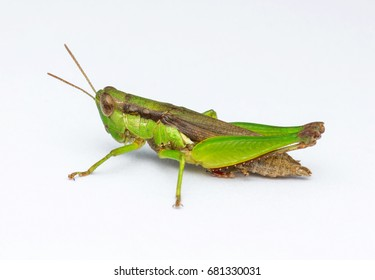 Cricket Noises Images, Stock Photos & Vectors | Shutterstock
