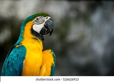 Closeup image of Green and yellow macaw