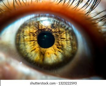 Close-up image of hazel colored pupil. macro eye veins and eyelashes