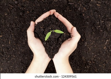 Close-up image of a human's hand holding small plants with soil - Shutterstock ID 124309561