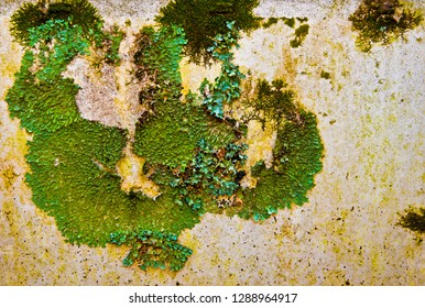 Close-up Image of Moss and Mildew on a White Metal Door