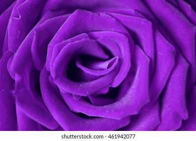close-up image of red rose in vintage color