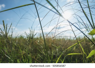Closeup image of rice and flower grass and sun day light with mountain and blue sky art abstract background