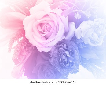 closeup image of roses in soft style pink blue and purple background