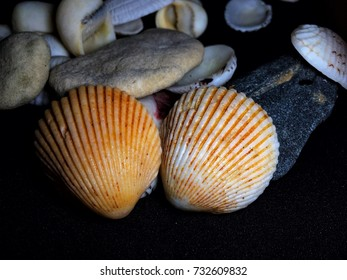 Closeup image of sea shell isolated in black background
