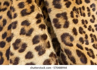 Closeup image of tiger fur for background user