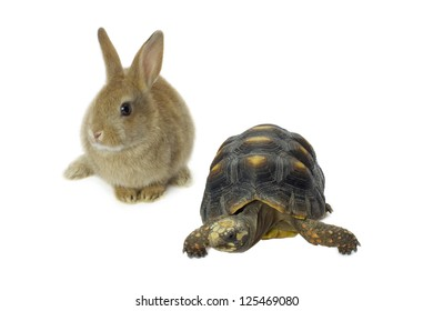 Close-up image of a turtle and rabbit in a white surface