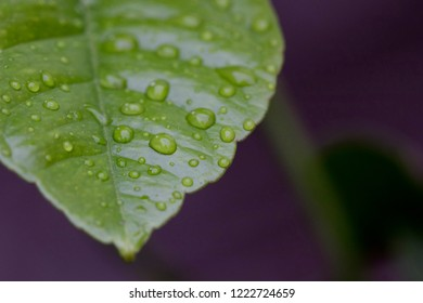 Closeup image of water drops on a leaf surface.