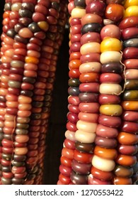 Closeup of Indian corn