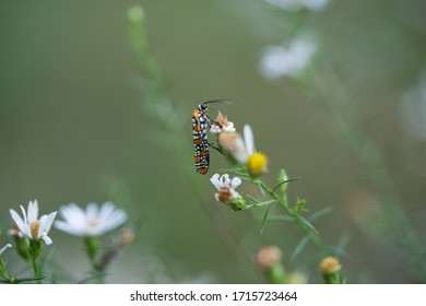 Closeup of insect on a aster flower with green background