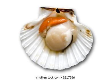 Closeup of a inside seashell (sea shell), scallop over white  background