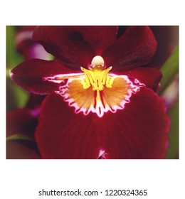 Closeup of interesting red and yellow orchid.