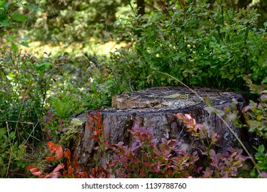 Closeup of an isolated dead tree stump in the forest