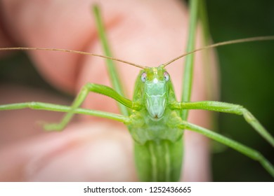 closeup with katydid