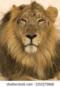 Closeup of King
