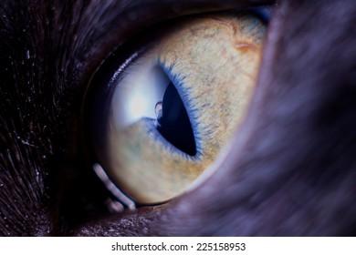 Closeup kitten eye