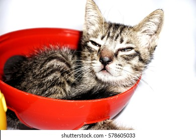 Closeup kitten isolate on white background.